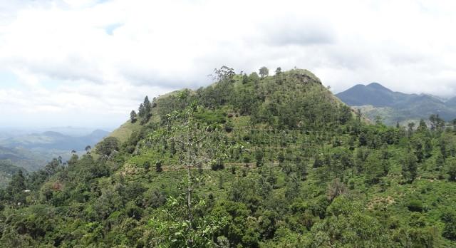 Sri Lanka Rundreisen ins Wandererparadies Ella