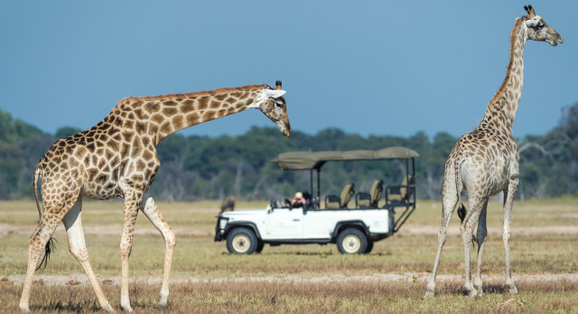 Safari ride at Davison's Camp in Hwange, Zimbabwe