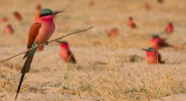 Entdecken Sie auf Namibia Safaris die artenreiche Vogelwelt im Caprivi Strip