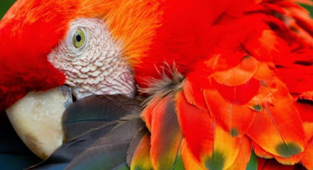 Enchanting Travels Brazil Tours
