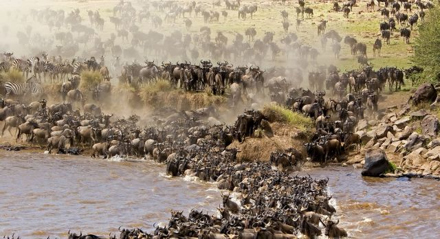 Unearthed: Everything you need to know about The Great Migration
