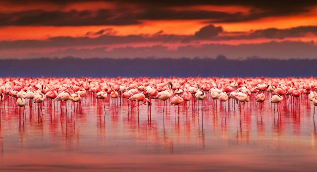 Top 10 Things To Do in Kenya - pink flamingos