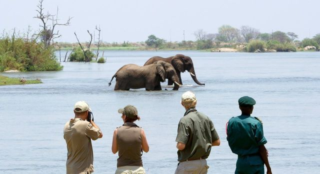 Highlights of Malawi - wildlife