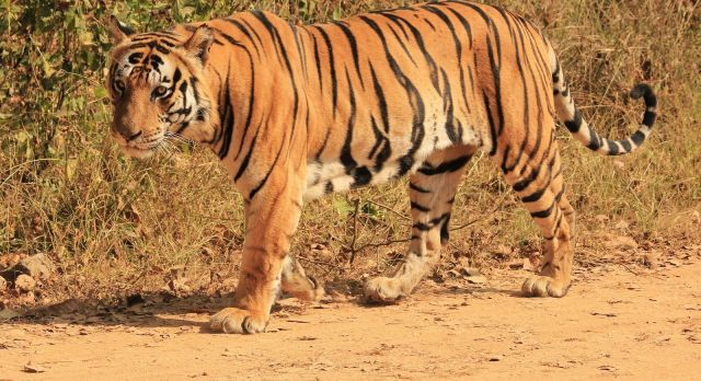 The Real Jungle Book: Safari in India