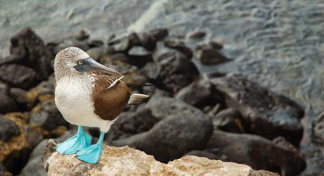 Cruising Darwin's Heaven: On A Galapagos Islands Tour