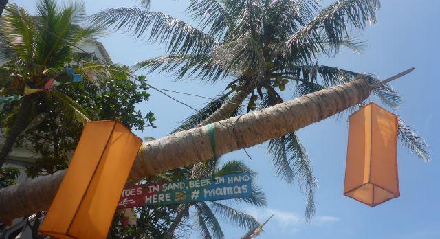Sri lanka Reisebericht - Laternen in den Bäumen
