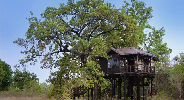 Pench Tree Lodge