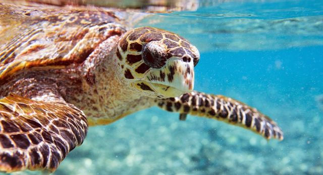 Swimming with turtles in the Seychelles on a summer trip