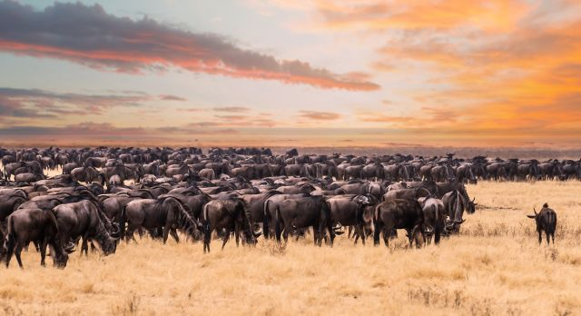 Serengeti, Great Migration