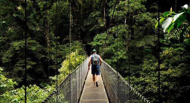 Canopy Walk in Monteverde Cloud Forest