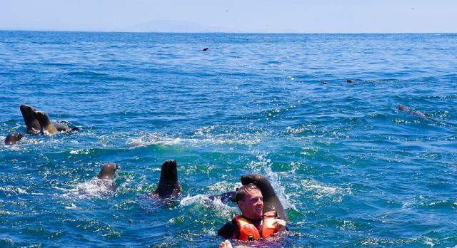 Swim with playful sea lions at Palomino Islands