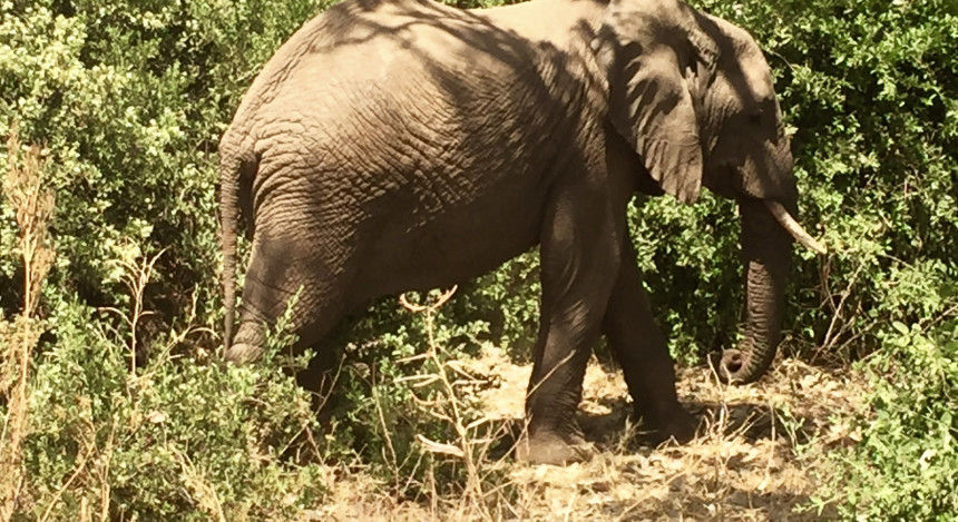 Enchanting Travels Africa Tours Guest Images Tamra Benjamin (4)