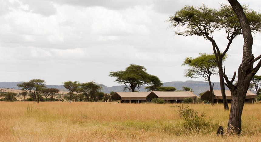 Safari-Zelte in der Ferne