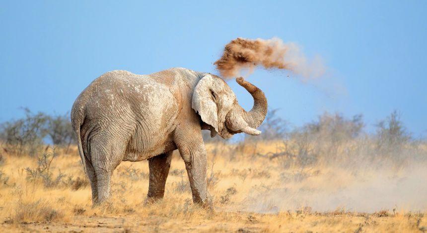 Elefant im Etosha-Nationalpark bewirft sich mit Sand
