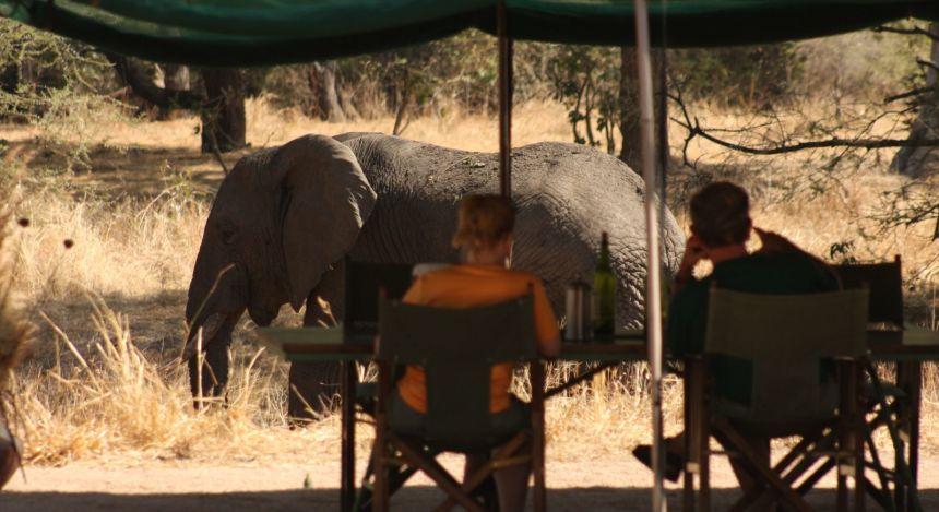Elefant geht an Zelt vorbei
