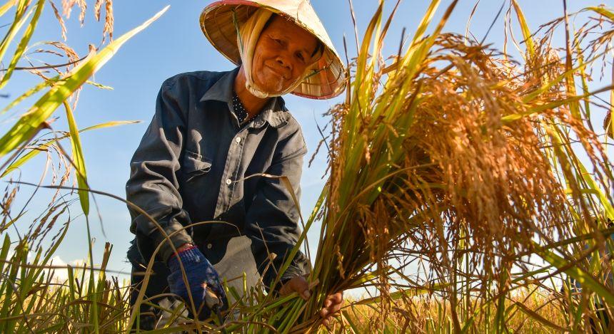 Halong Bay or Mekong Delta: Farming on the Delta