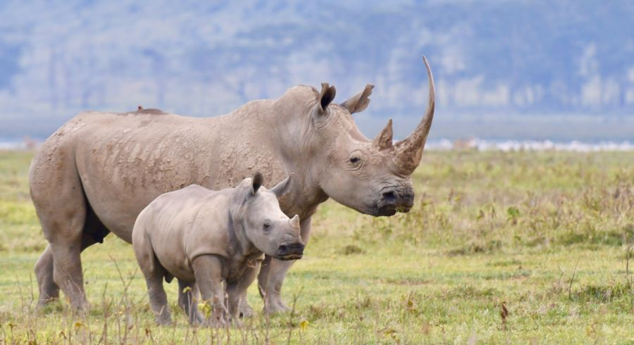 Best Time for a Wildlife Safari in Africa