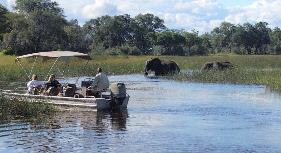 Bootssafari: Beobachten Sie Elefanten beim Baden