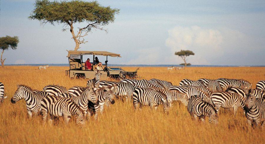 Zebras auf Kenia Safari