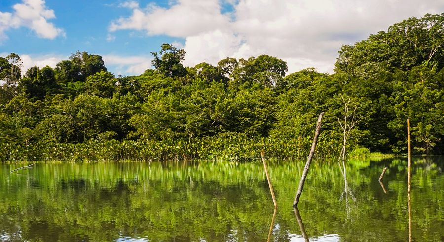 Enchanting Travels Ecuador Tours Amazon Yasuni National Park