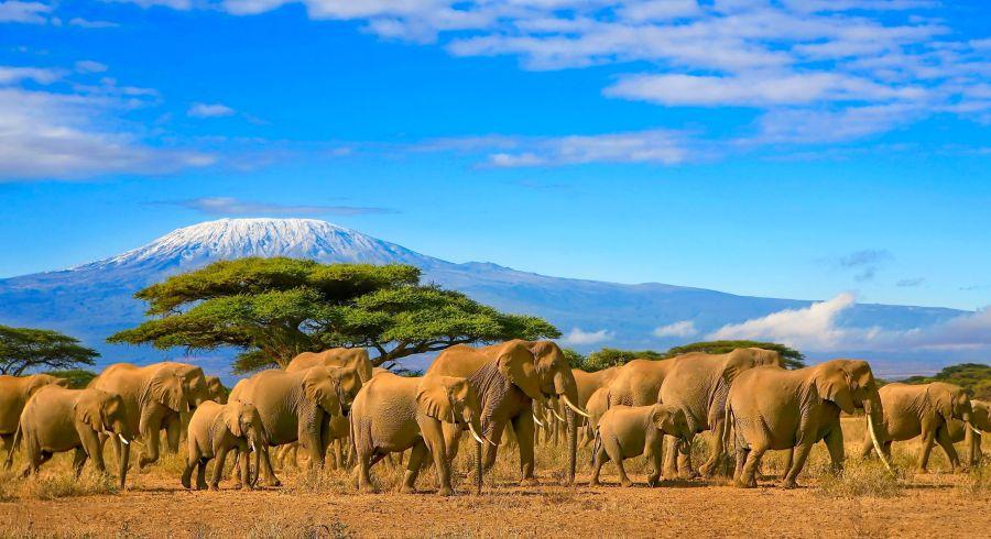 Elefanten Herde, Tansania