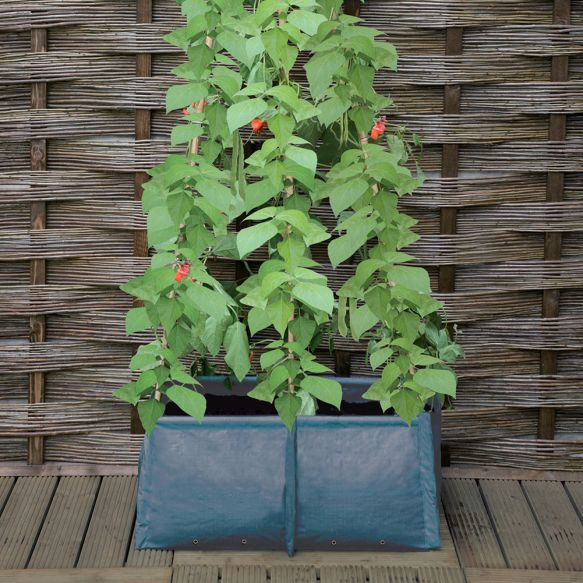 Pea and Bean Patio Planter from Haxnicks