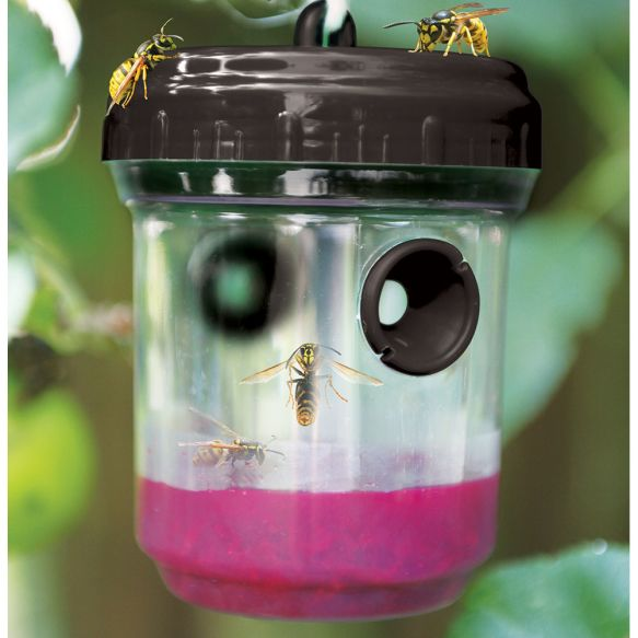 Haxnicks Wasp Trap