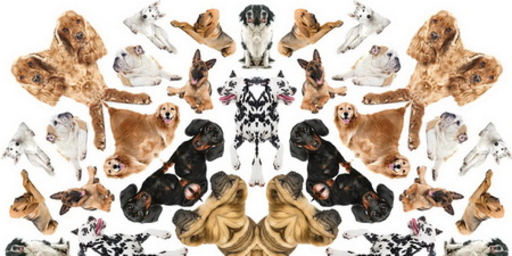 Spotting the dogs - the importance of reviewing portfolios & client servicing