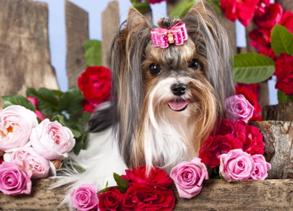 The pampered pooch that will inherit a house!