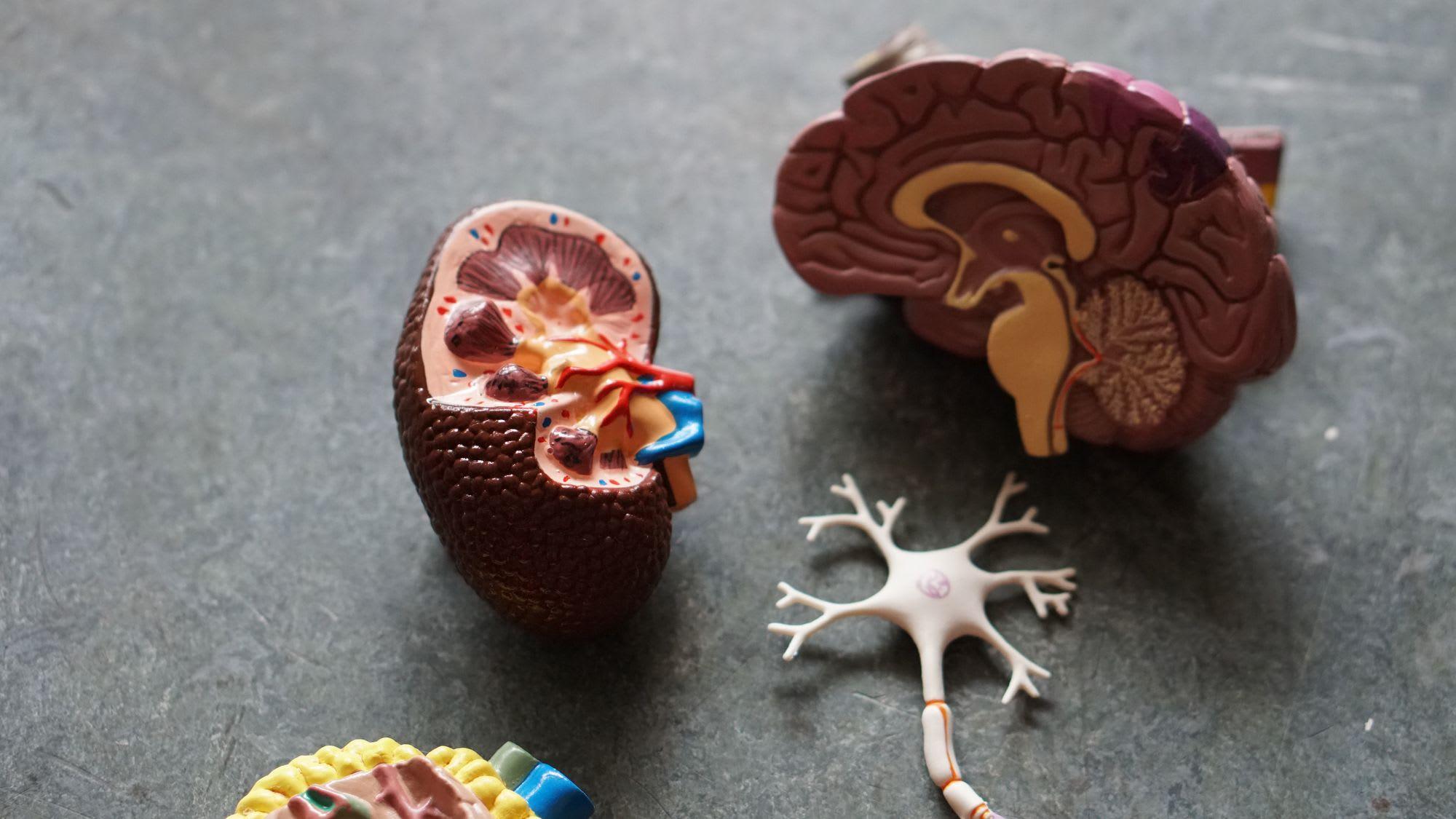 La neurodiversité, un atout pour l'entreprise