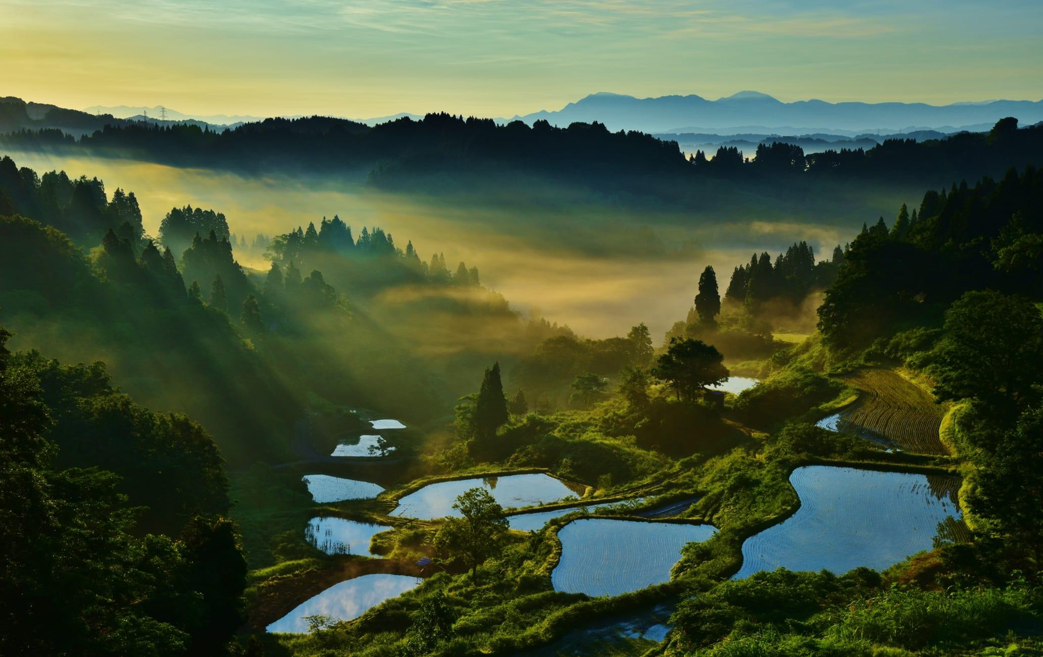 terraced rice fields in kamou