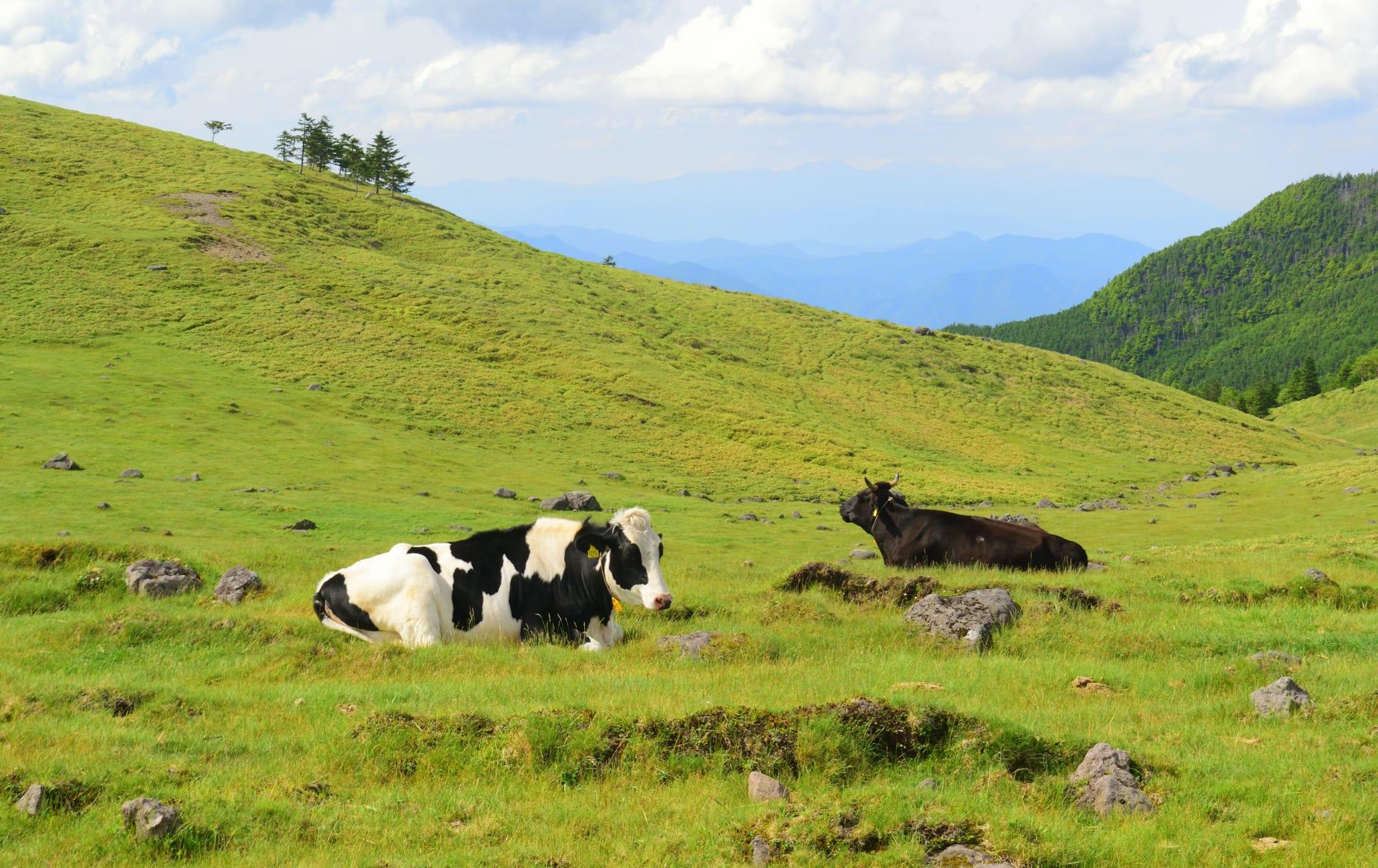 Utsukushi-ga-hara Highlands