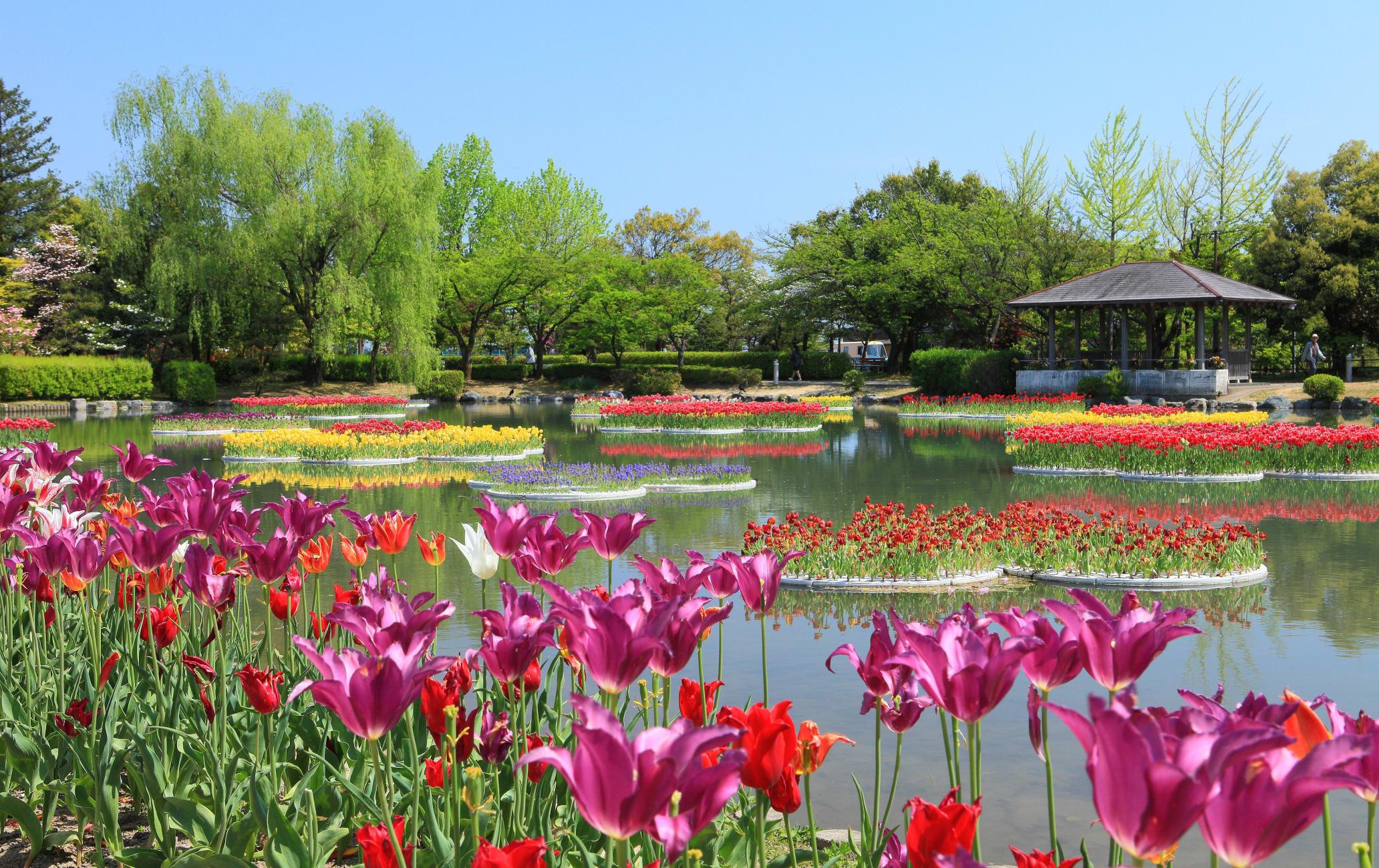 Tonami Tulip Fair at Tonami Tulip Park-SPR