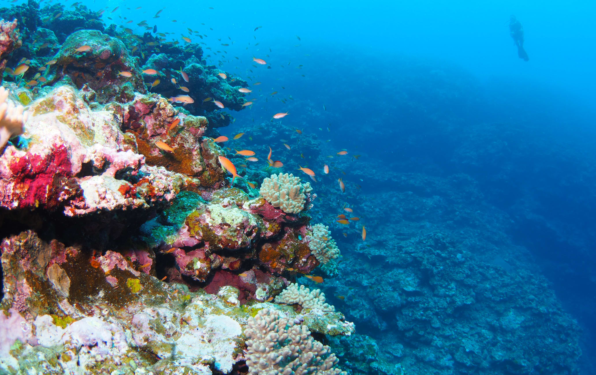 Diving in Ishigaki Island