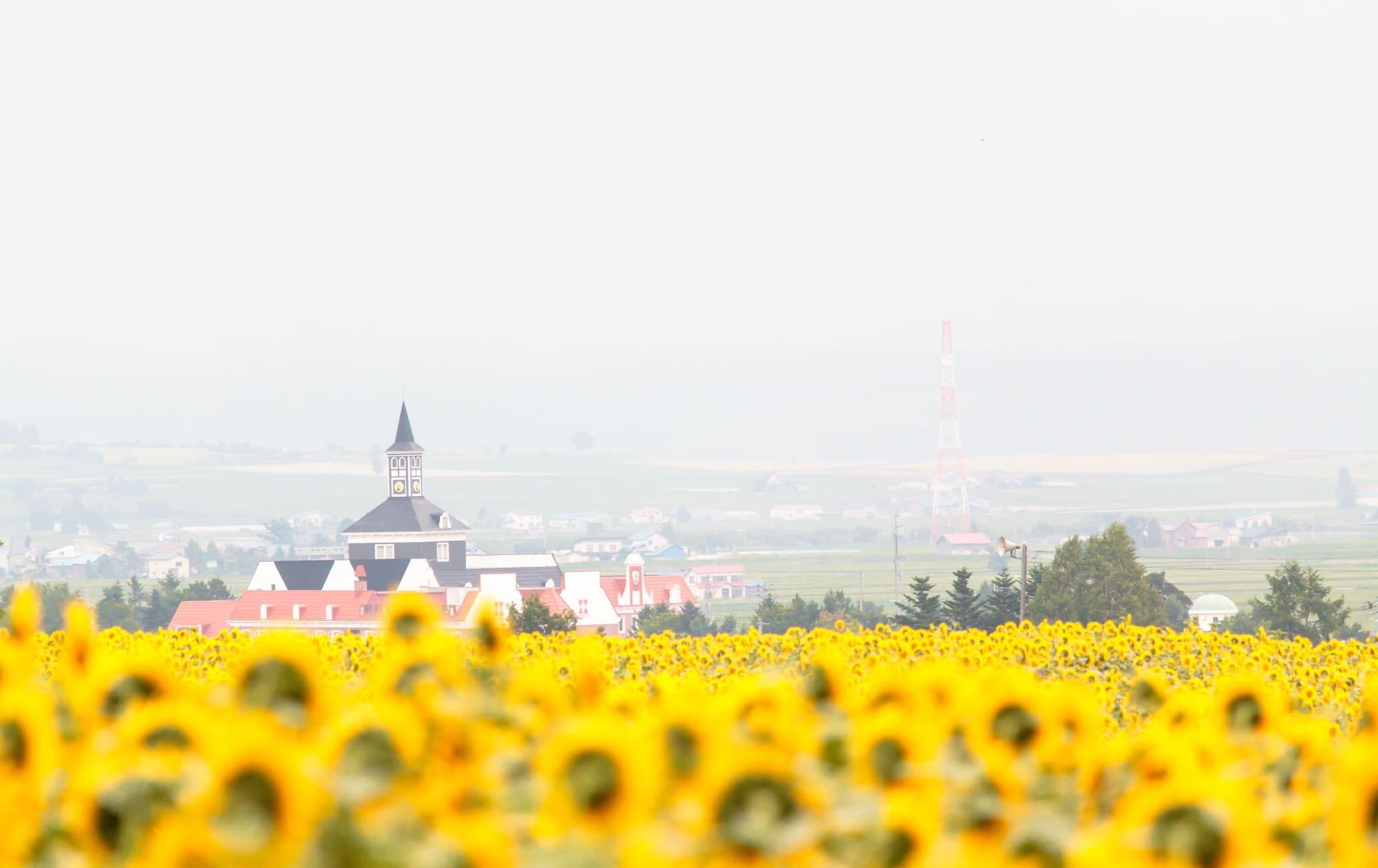 Hokuryu of sunflower village-SUM