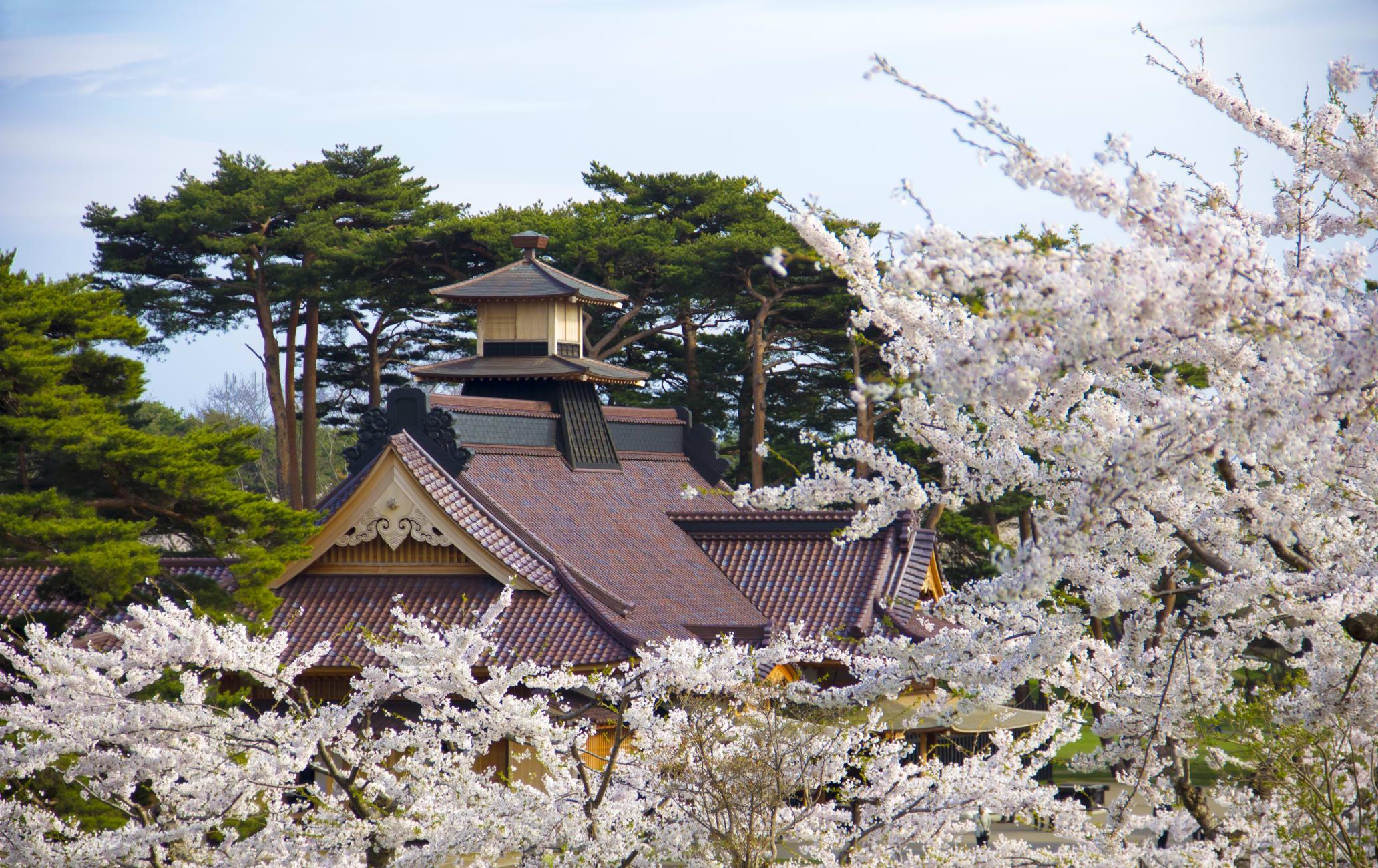 Goryokaku Park - Cherry blossom-SPR