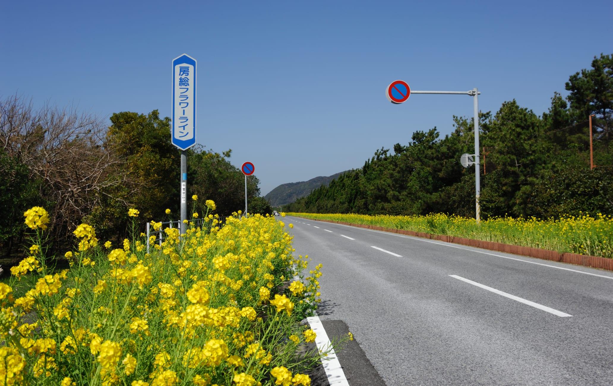 Boso Flower Line