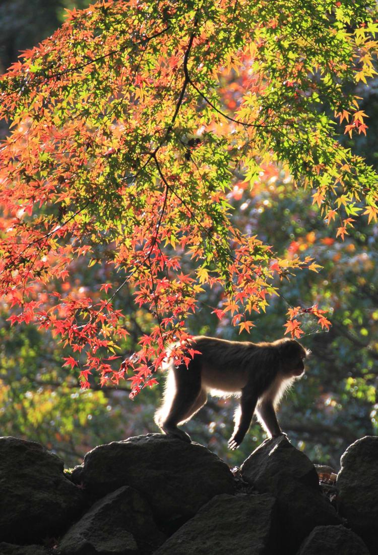 Mt. Takasaki Wild Monkey Park