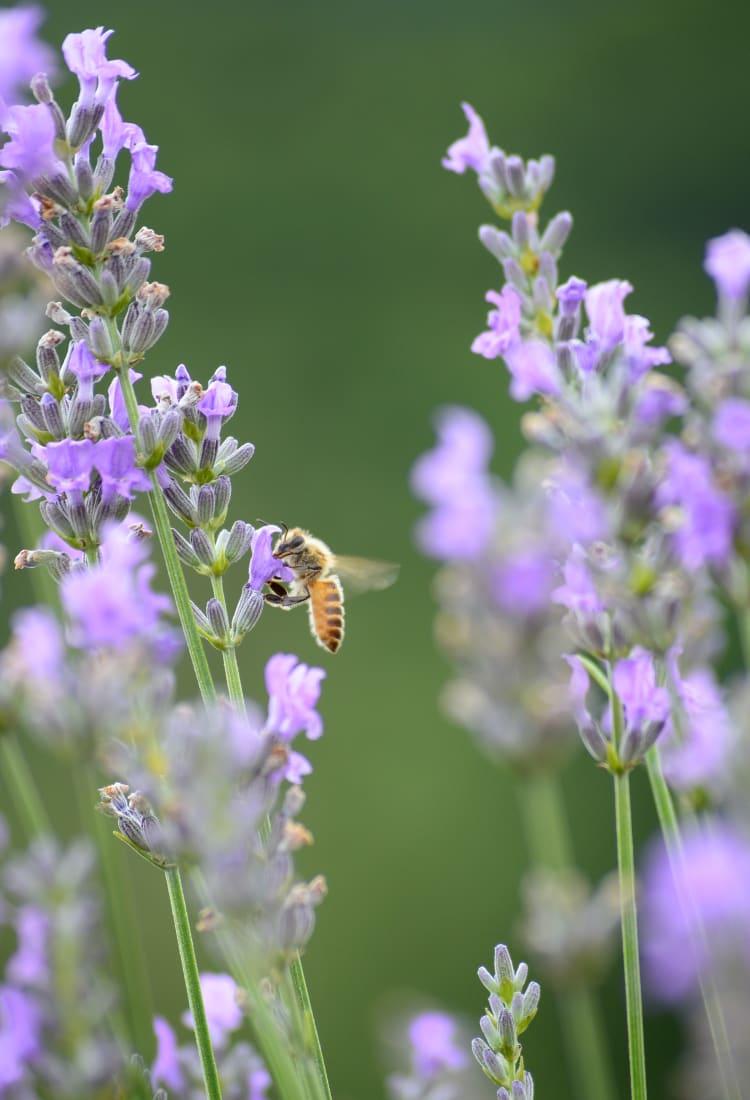 Hiruzen Herb Garden