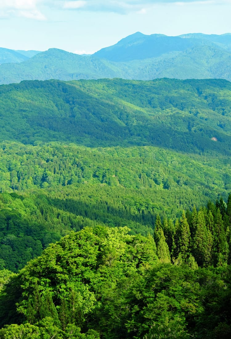 shirakami-sanchi mountain range