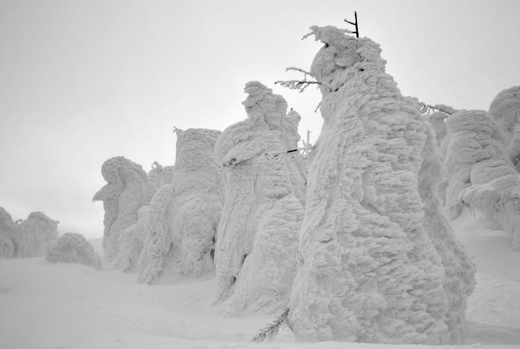 Zao Snow Monsters