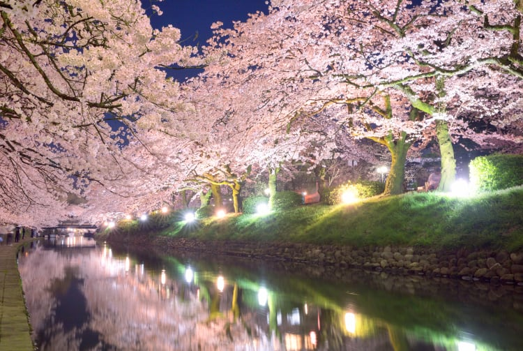 Cherry blossom of Matsukawa Beri riverside-SPR