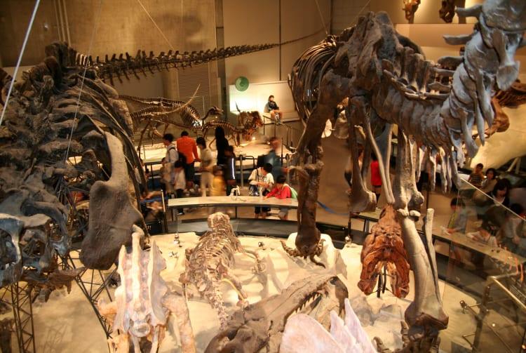 Kokuritsu Kagaku Hakubutsukan -National Science Museum
