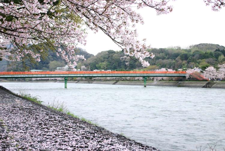 the upper stream of Uji Bridge