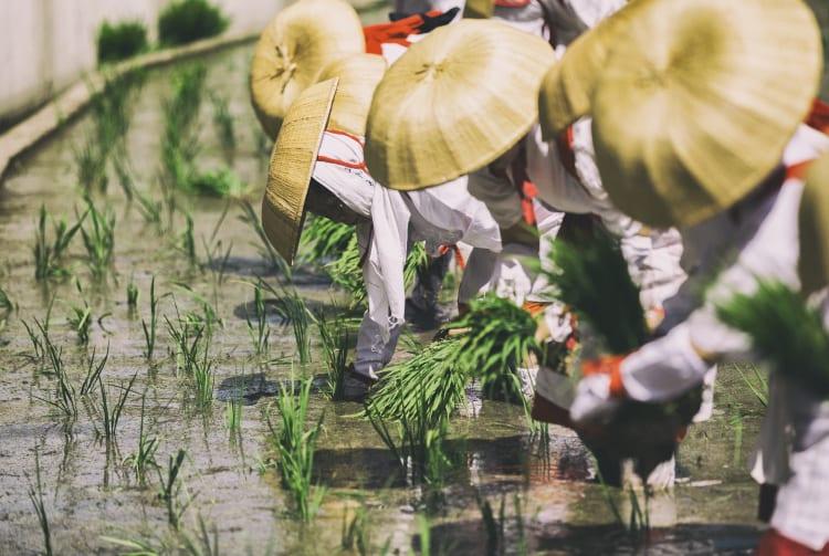 Otaue Rice Planting Festival