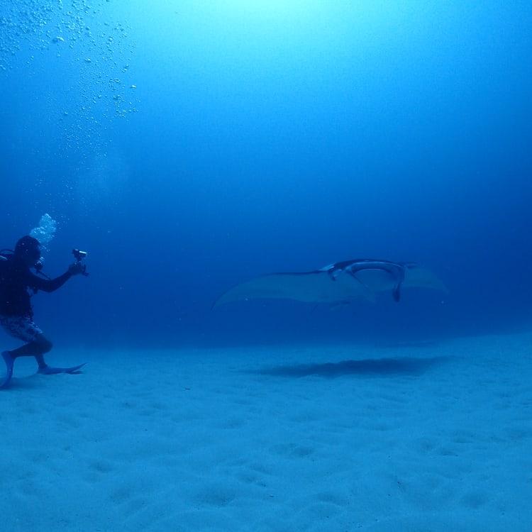 Diving in Ishigaki Island