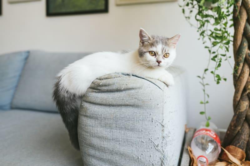 Cheap Cat Scratching Post Ideas