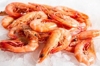 Fresh seafood as a political foil.