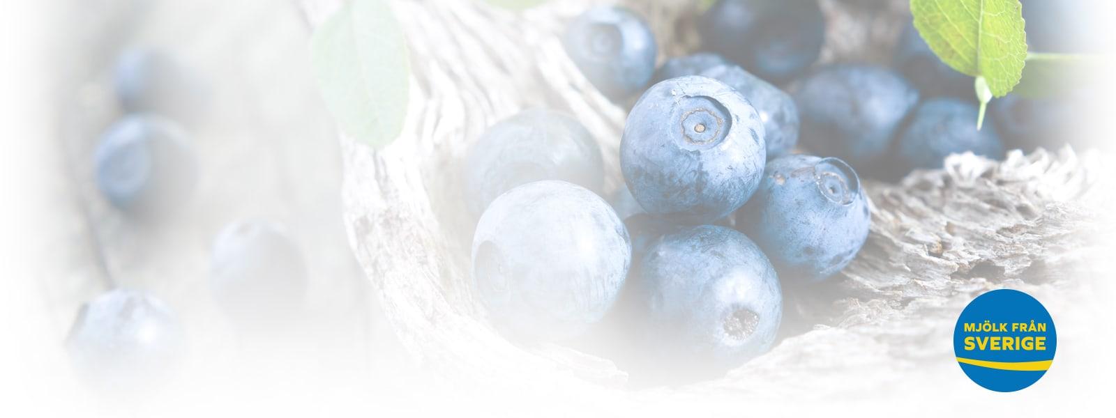 blåbär bakgrund med Mjölk från Sverige logo