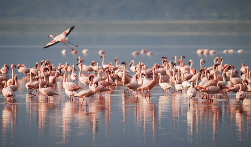 Upendo Foundation: Kenya Adventure Tour: Nature Trek Around Lake Victoria